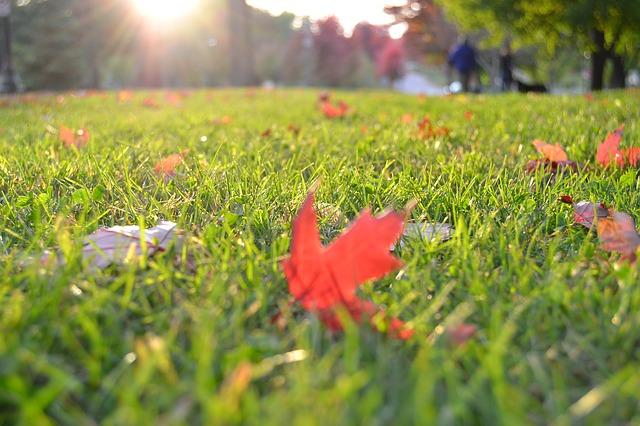 何 のか 隣 芝生 の は 色 な